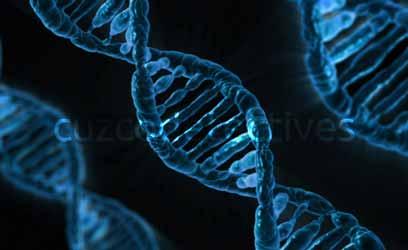 tecnologia ADN